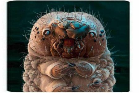 Este ácaro vive en tu cara y está loco por devorar tu piel muerta