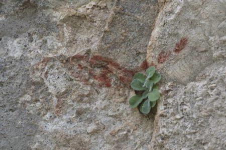El misterio de Algodonales: ¿pinturas rupestres o una broma de los sesenta?