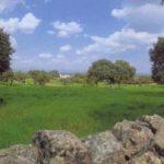 Sierra de Cardeña y Montoro, tradición montera