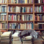Goliat en la librería