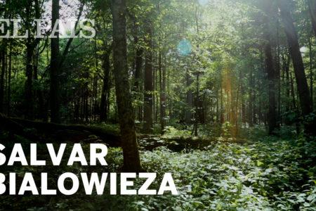 La lucha por salvar el bosque primitivo de Bialowieza